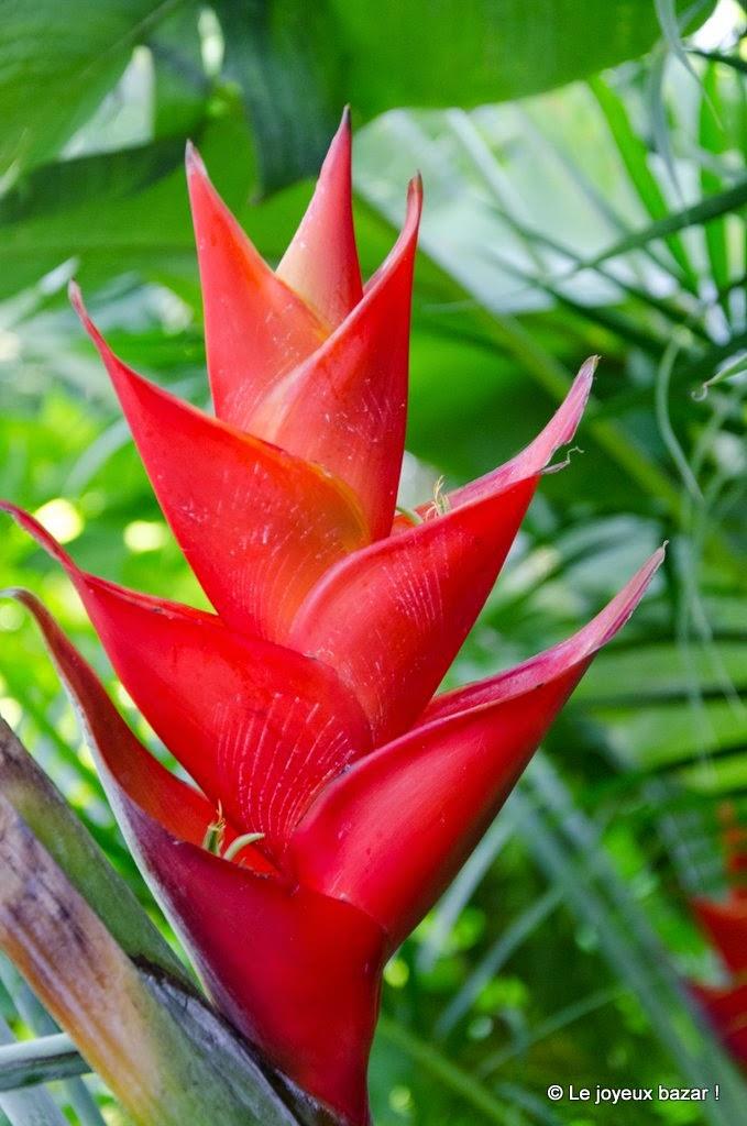 Guadeloupe  - Deshaies - jardin botanique