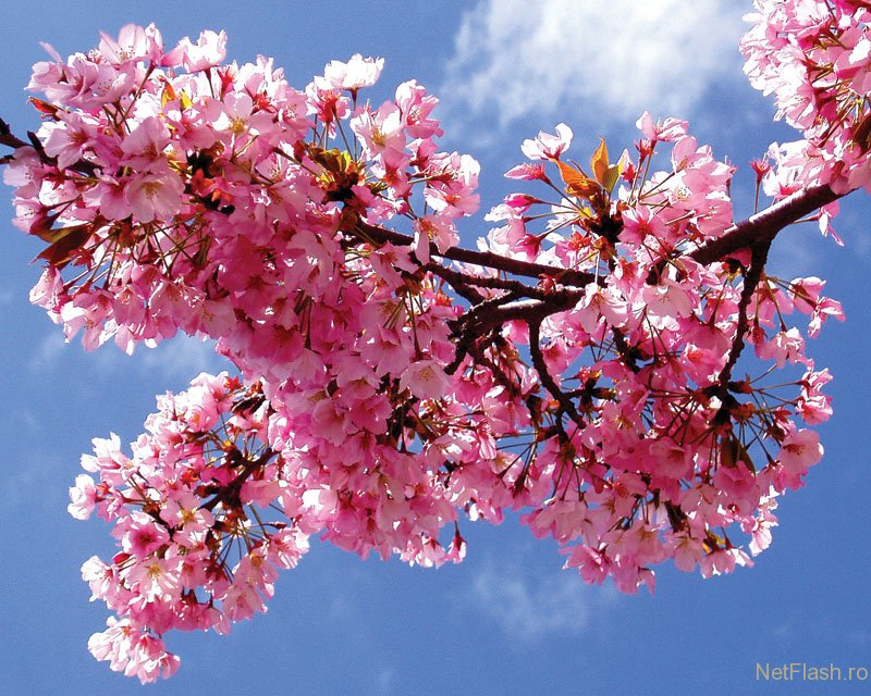 Imagini desktop primavara in imagini for Immagini desktop primavera