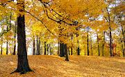 Hermoso bosque en la época de otoño. Wallpaper de un lindo bosque en la . hermoso bosque en la epoca de otoã±o