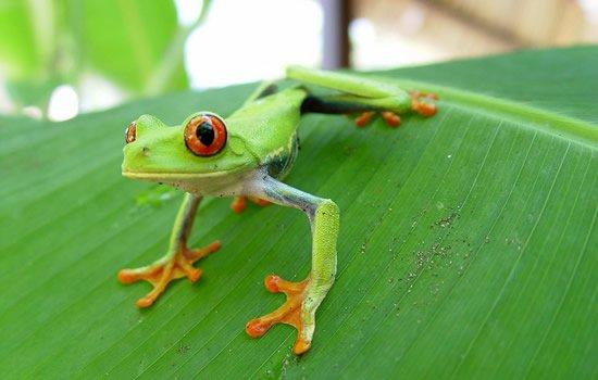 Mi clase: Describe una rana.