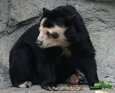 Bear in Leipzig Zoo