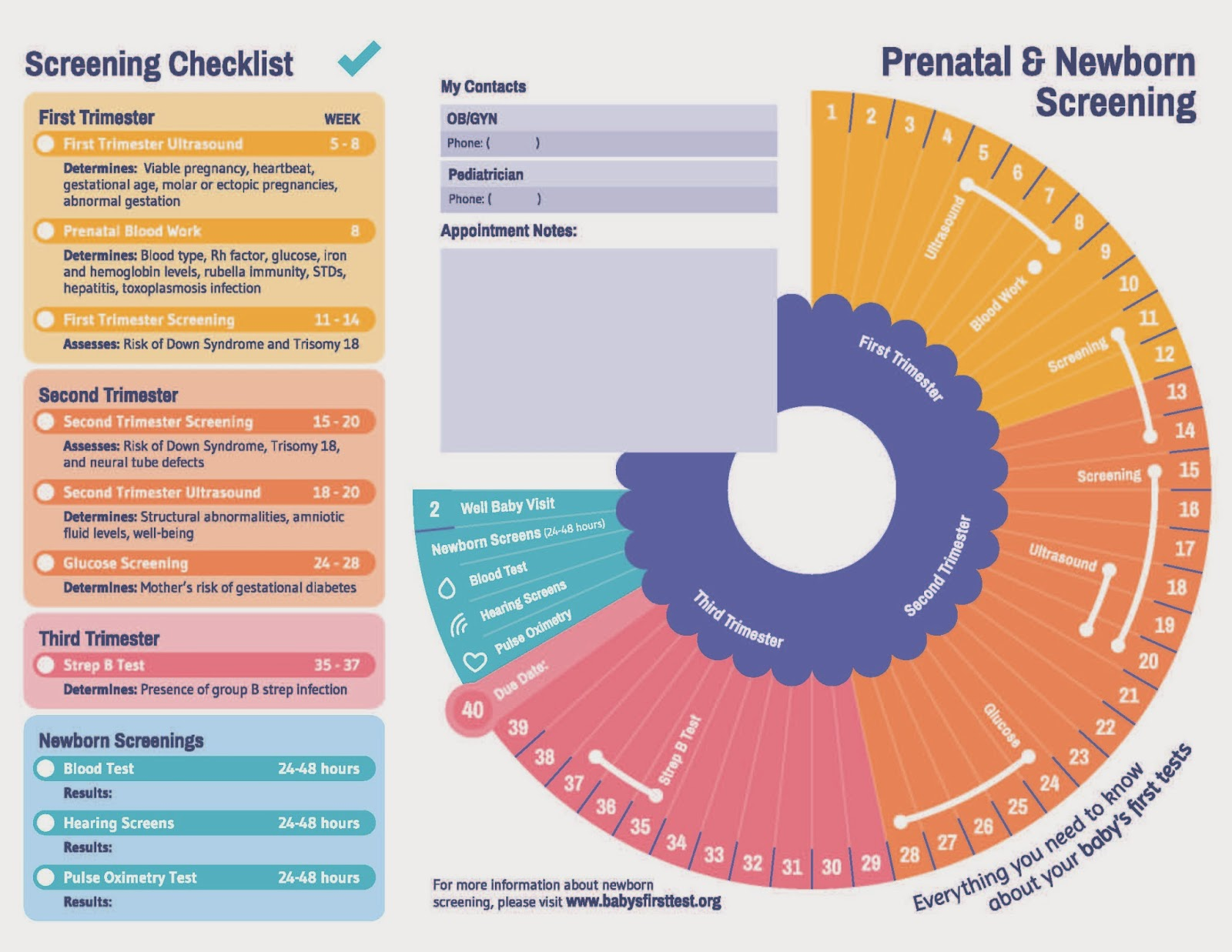 mcadd for moms: prenatal and newborn screening timeline