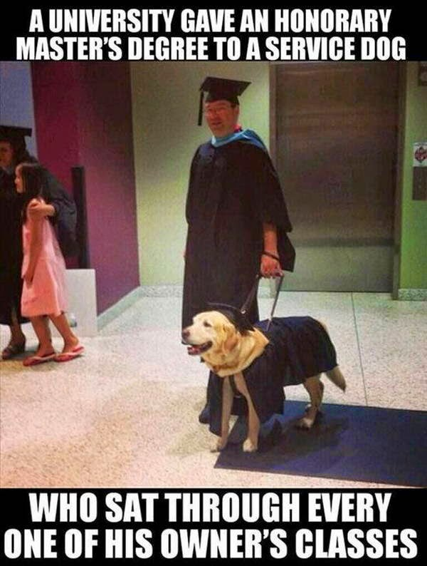 People doing amazing things for animals (28 pics), a university gave an honorary master's degree to a service dog who sat through every one of his owner's classes