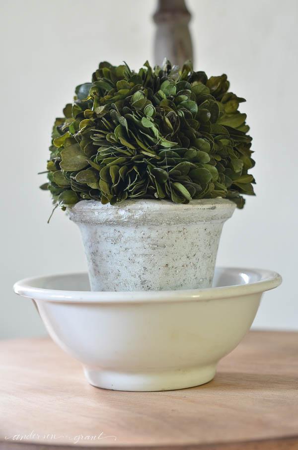 Unique decorating idea....display a boxwood topiary inside a white ironstone bowl.  |  www.andersonandgrant.com