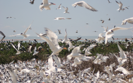 The Race to Reclaim Louisiana's Vanishing Coastline