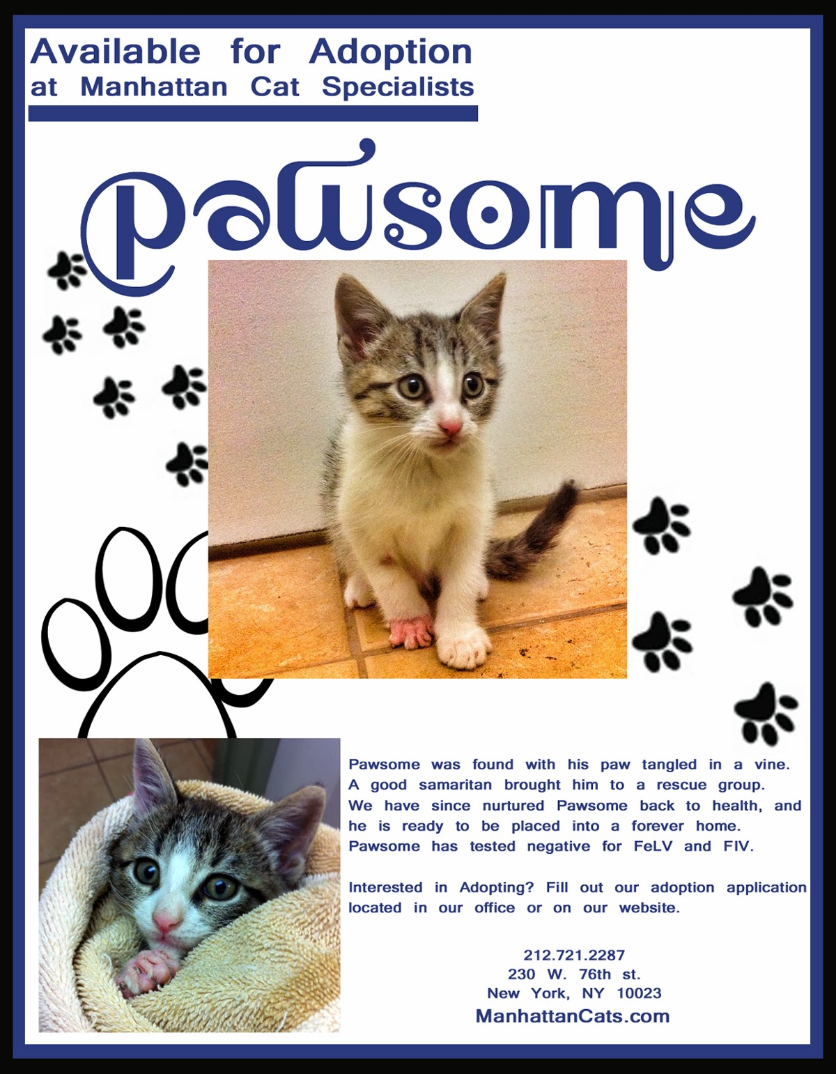 Kittens for Adoption Singapore  Home  Facebook