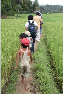 children in rice field