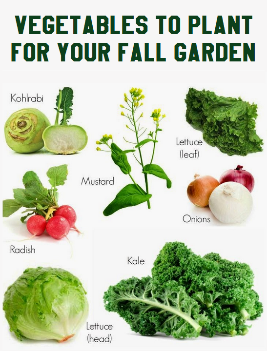 Vegetables To Plant For Your Fall Garden Vegetable Gardening 101 Gardening