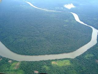 Bioma hutan basah hutan hujan tropis amazon