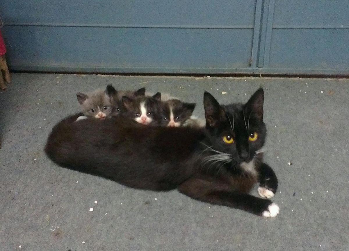 Котята выглядывают из-за спины мамы кошки - прикольные коты 22-11-12