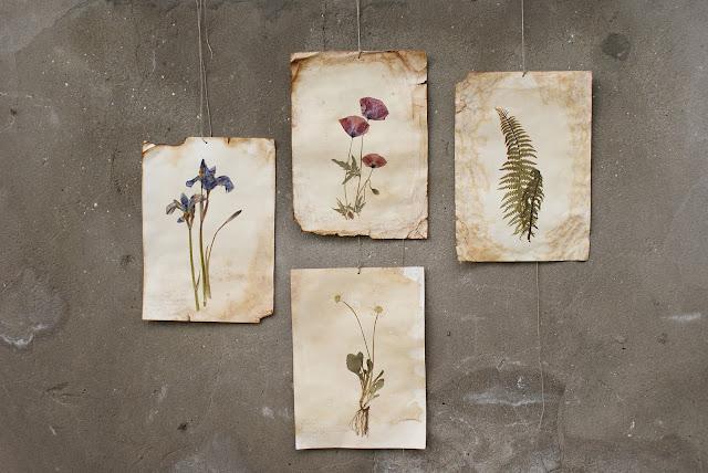 botaniczne motywy, suszone rośliny