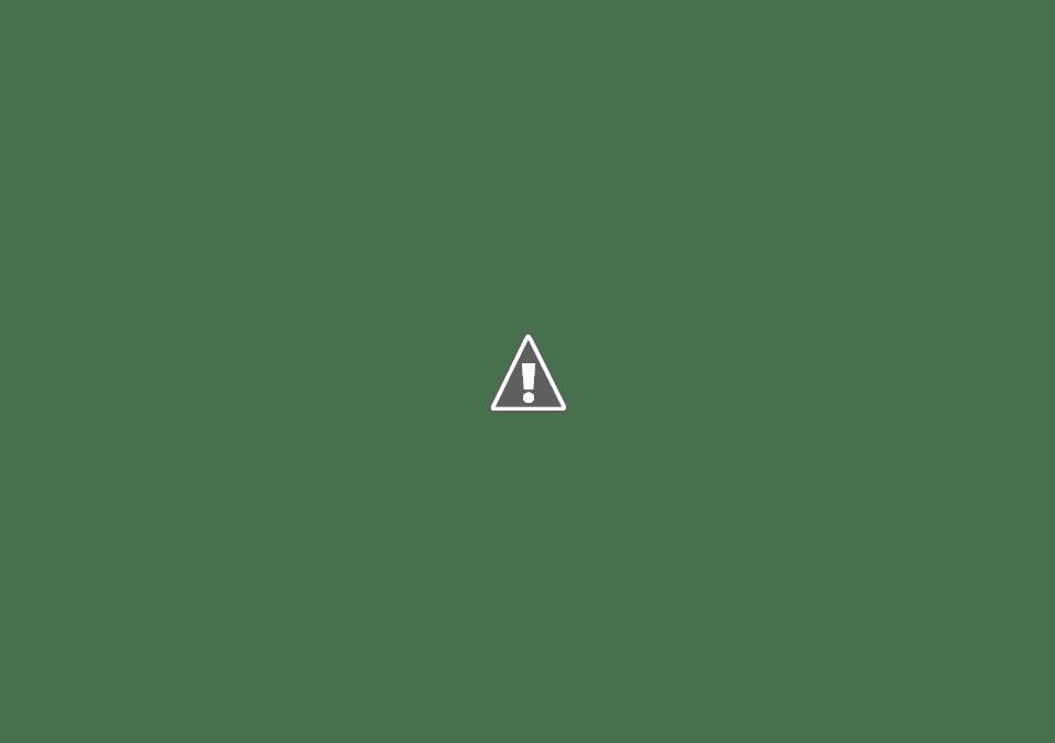 rose di carnevale