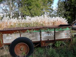 Ollie's Wagon.