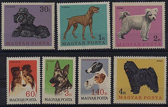 1967年ハンガリー共和国 プードル、ビズラ、プーミー、ラフ・コリー、ジャーマン・シェパード、フォックス・テリア、プーリーの切手