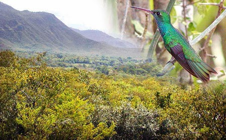 Olanchito,Arenal,Honduras,Colibri Esmeralda,refugio silvestre