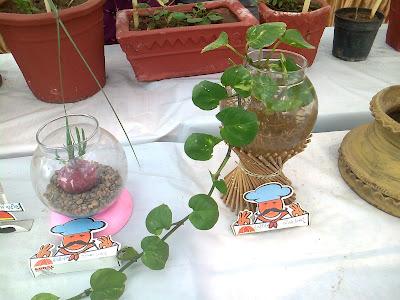 money plant ahmedabad