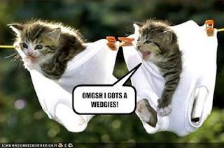 Gambar-Gambar Kucing Lucu