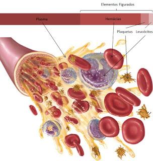 O sangue é constituído por diversas células, que estão em suspensão no plasma.