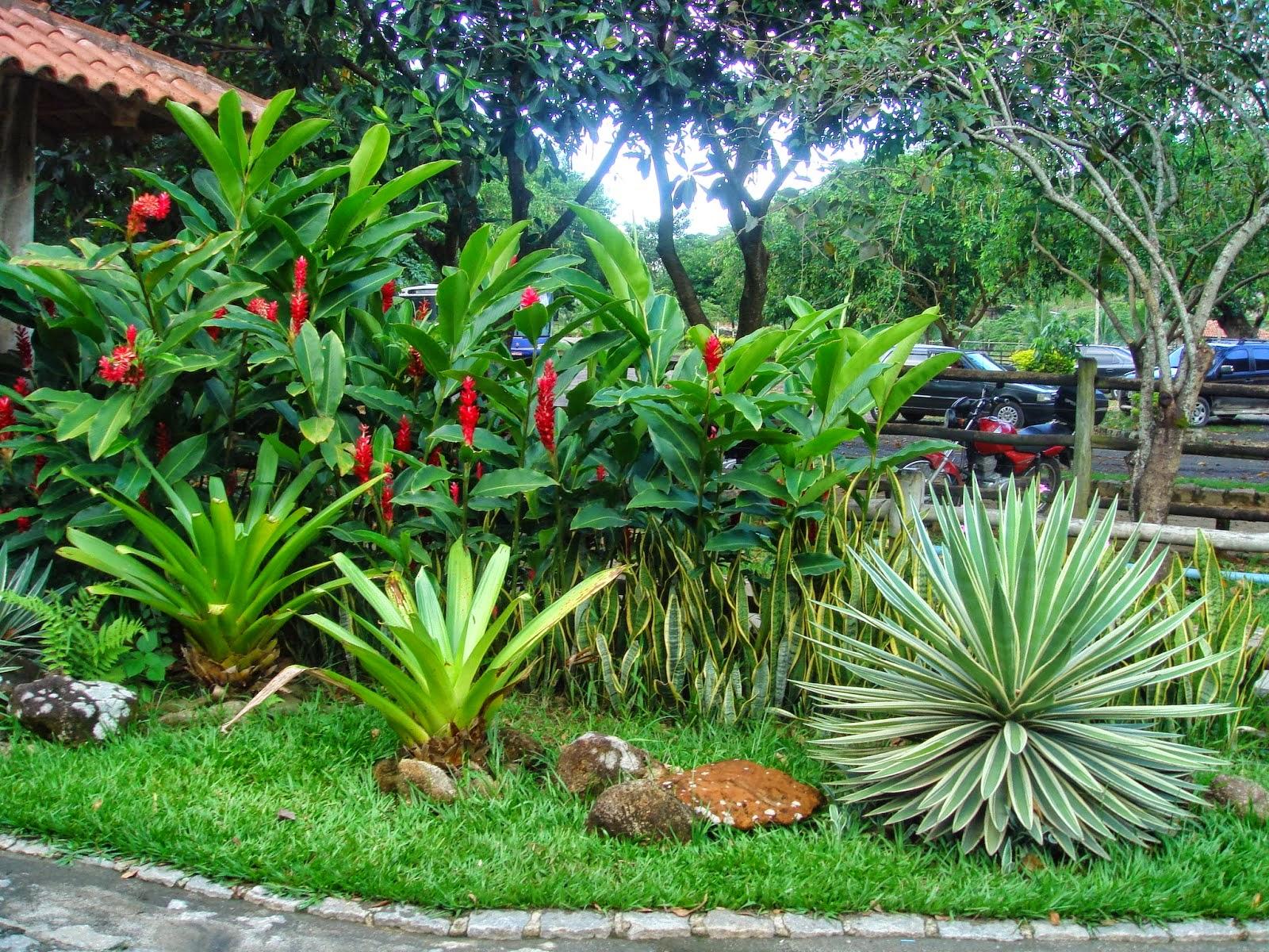 Decora Interi  Jardins tropicais