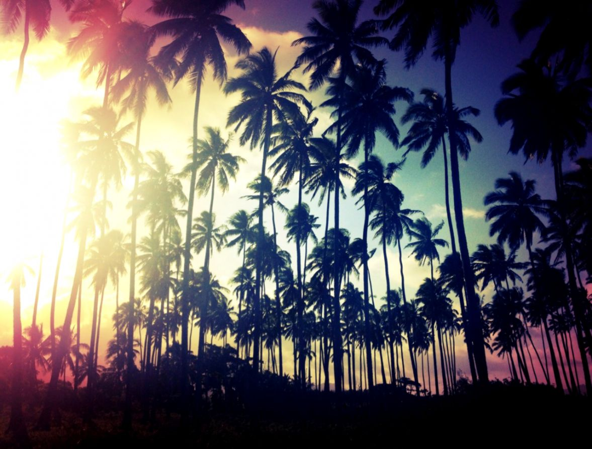 Palms Tumblr photography and Tumblr on Pinterest