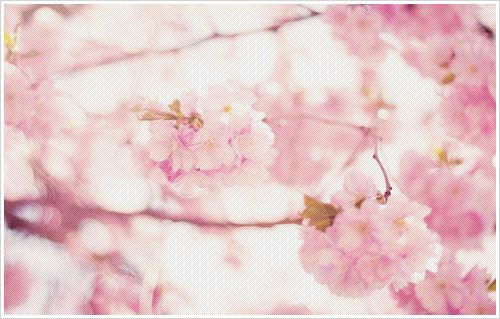 http://3.bp.blogspot.com/-cL9xKvBpfhk/UU8vmvyUWfI/AAAAAAAAK74/Q3ip2BjKKDc/s1600/Flower5.png