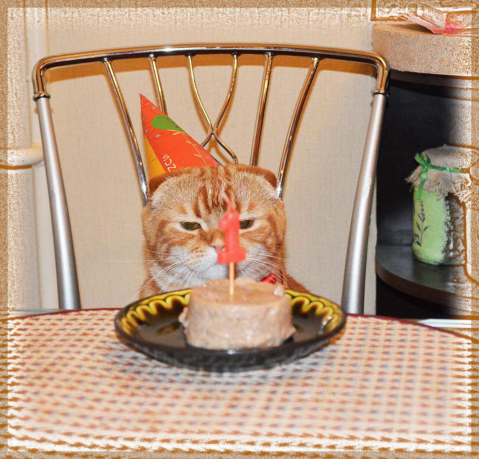 угощение для кота