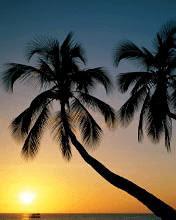 Palma i zalazak sunca download besplatne pozadine slike za mobitele