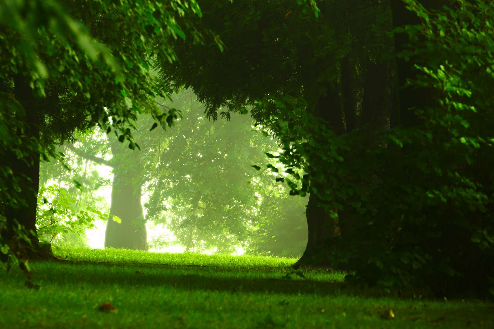 http://3.bp.blogspot.com/-cLKTHMHLI9k/TnXXLCbKqII/AAAAAAAAAo0/a09eCAfcHhg/s1600/Woodland+by+Dariusz+Duma.jpg