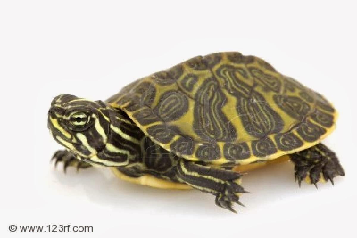 Estructura ósea de una tortuga | EL MUNDO ANIMAL