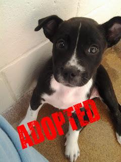 Adopted Dog Previous Name