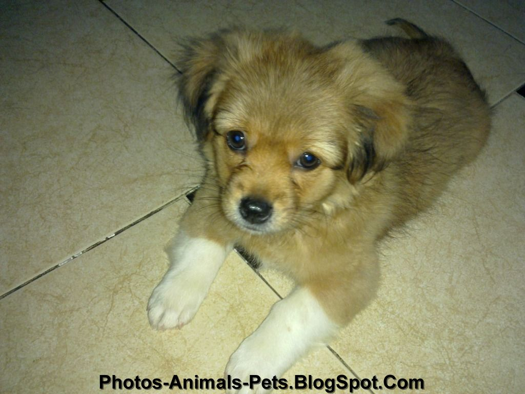 http://3.bp.blogspot.com/-cLiIM-yWqR0/TgXp9T36klI/AAAAAAAABas/lEjdvvWTe3Q/s1600/Cute%2Bpictures%2Bof%2Bdogs_0001.jpg