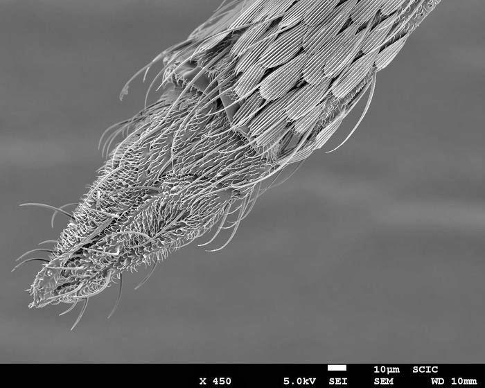 fotografía vista al microscopio