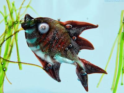 Fish Standard Resolution Wallpaper 1