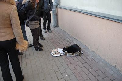 seekor kucing mengemis di Belarusia