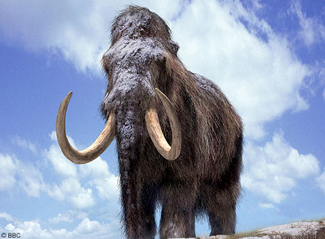 Woolly Mammoth | Endangered Animals Facts, Wildlife Pictures And ...