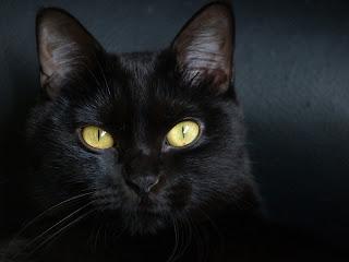 Martes y 13 - Gato negro, mala suerte, superstición