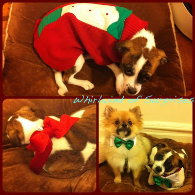 Petco 2012 holiday outfits review
