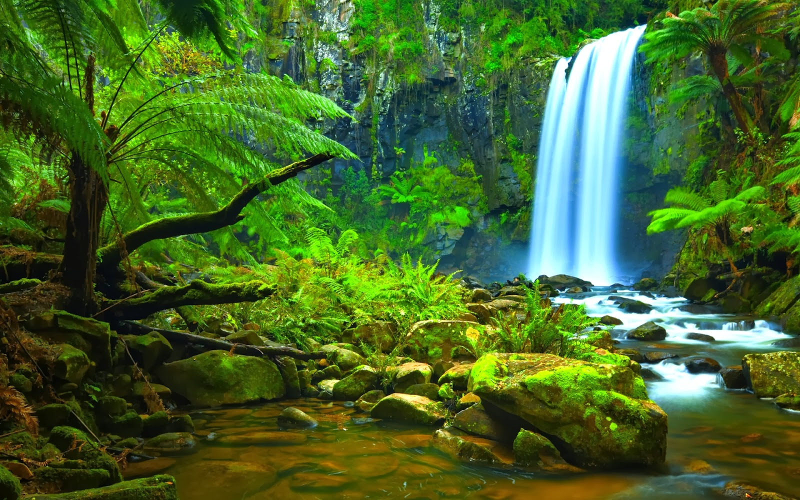 beautiful hd wallpapers amazon rainforest hd wallpapers