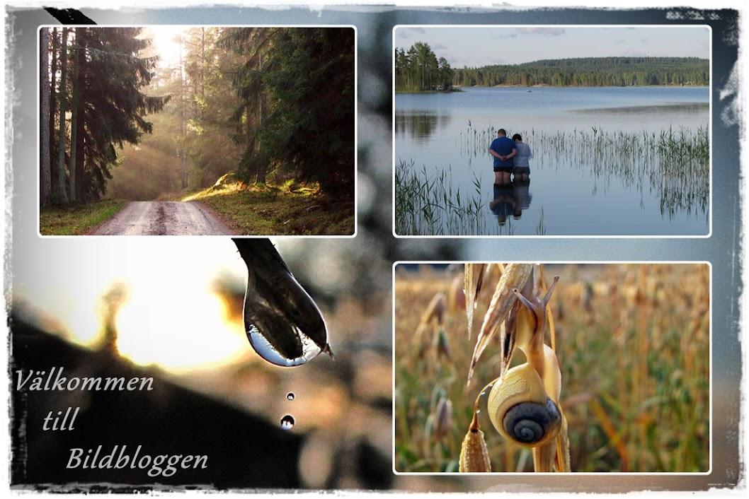 Bildbloggen