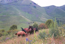 Wild horses on moutain outside of Bishkek, Kyrgyzstan