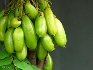 Manfaat dan Resep Herbal Belimbing Wuluh