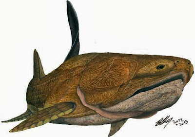 Early fish ancestor found in China