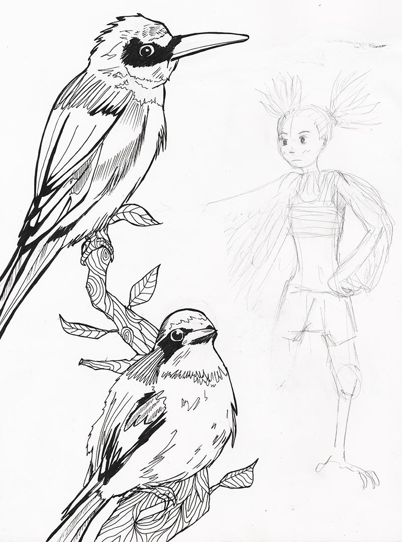 katie macon bird drawings at the oxford natural history museum