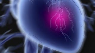 Zbulohet proteina që ripërtërin indet e zemrës pas infarktit