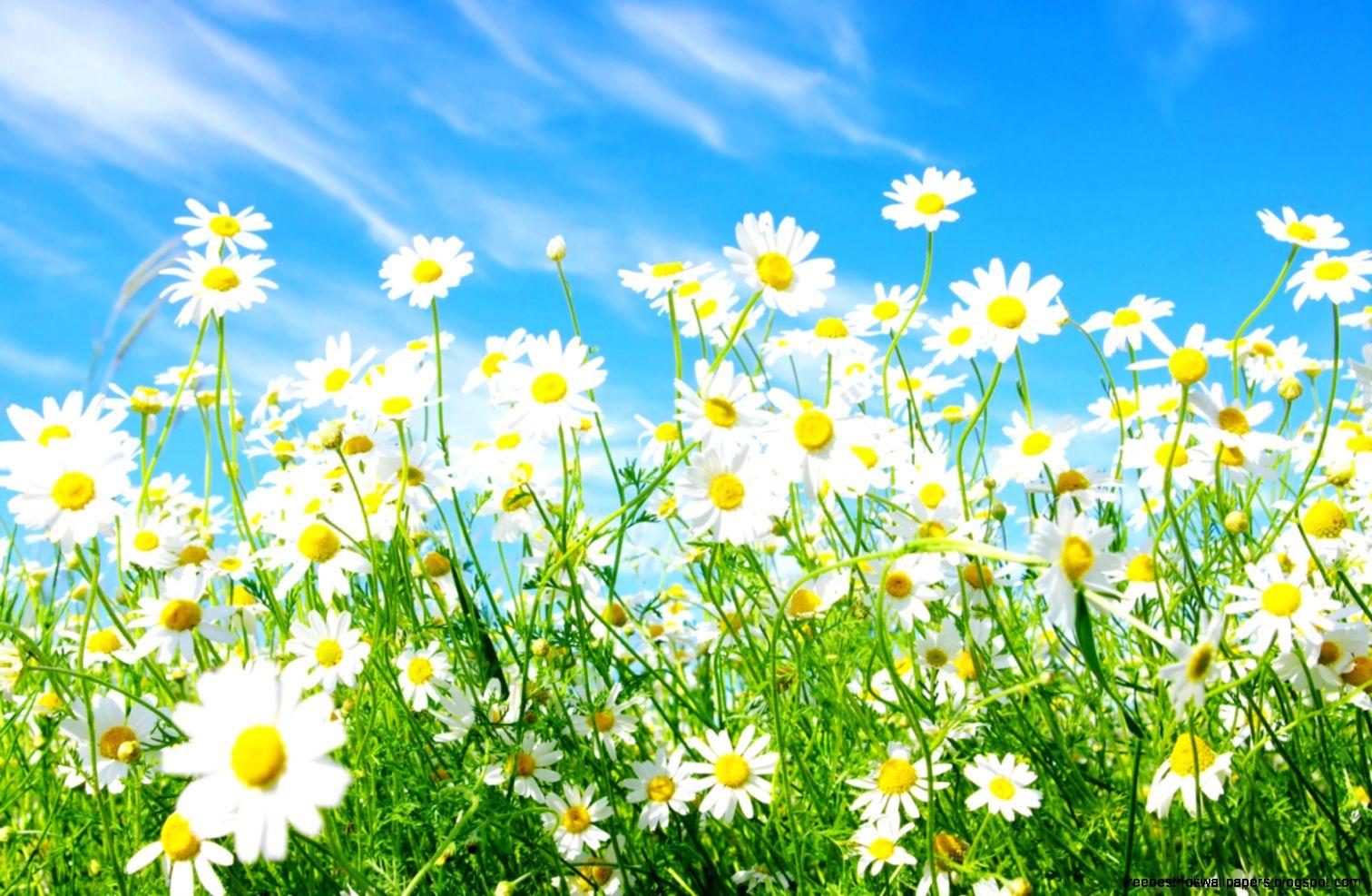 Spring Flower Wallpaper Free Free Best Hd Wallpapers