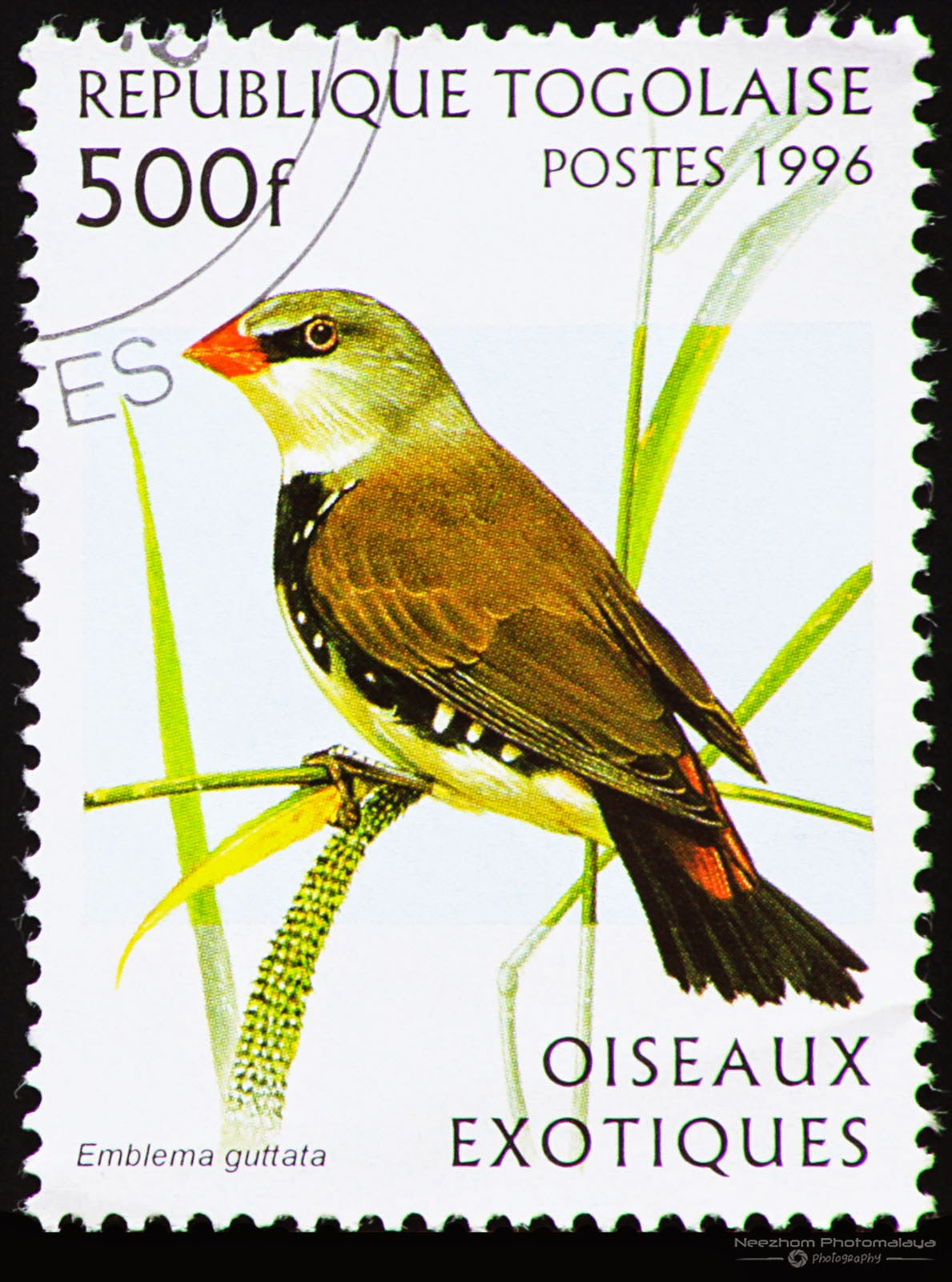 Togo 1996 Exotic Birds stamp - Diamond Firetail (Emblema guttata) 500 f