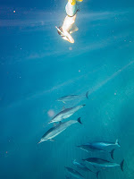 http://www.tropicallight.com/water/dolphins/26nov13dolphins/26nov13dolphins.html