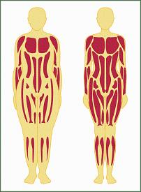 BAB II TINJAUAN PUSTAKA. Mineral, 15,3% Lemak, 84,7 % Massa lemak bebas (FFM).