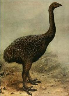amazing-extinct-animals-resurrected-by-cloning-moa
