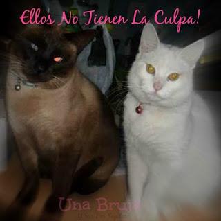 Bruja en campa�a: Dejemos de echarle la culpa al gato!